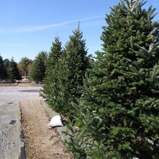 Celebrate the holidays with our christmas trees