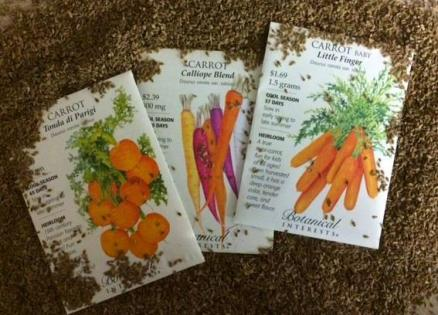 Love fresh carrots? Now is the time to get your seeds started for this tasty root crop. They can be grown in the ground or containers, we