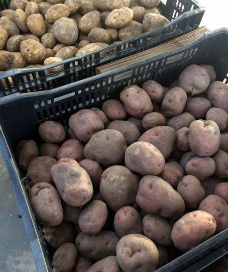 Seed potatoes are here! we've got three varieties of spuds to choose from that are old by the pound. Get yours today