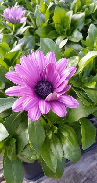 Greengate is blooming just like this lovely flower! Come by to get a head start in your garden!