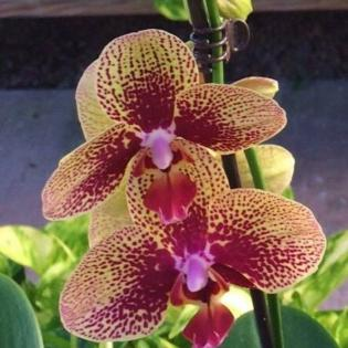 Beautiful orchid plant